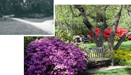 The Azalea Garden at the Art Museum, before and after