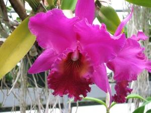 Waldor orchid2