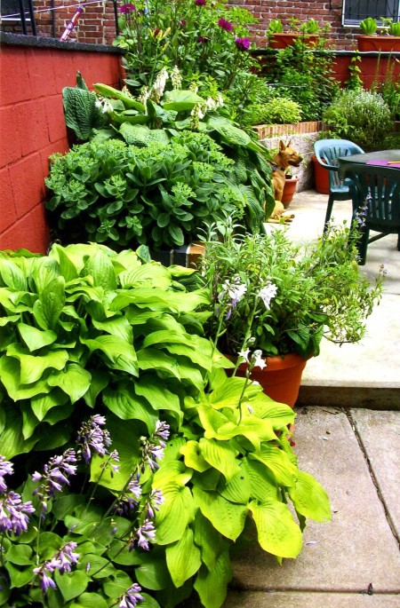 •Young Friend Lora Russo and her boyfriend, Alex Duller, of 19145, entered for the very first time this year and earned a third place for individual container garden.